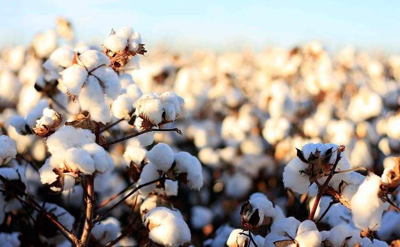 5 Eco-Friendly Fabrics That Are Good For The Environment & Your Skin